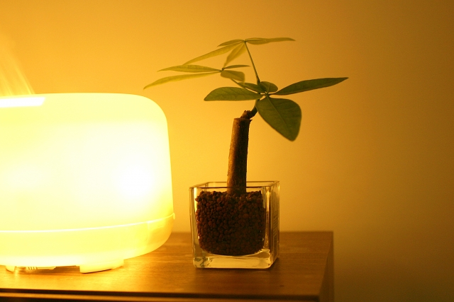 柔らかな照明と観葉植物